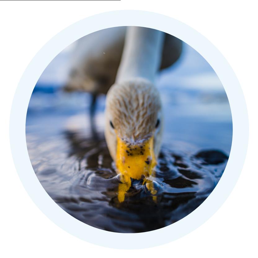 Alkazone-Mineral-Drops-for-Birds